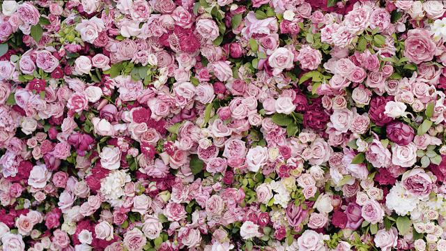 La vie en rose | 321mecaso